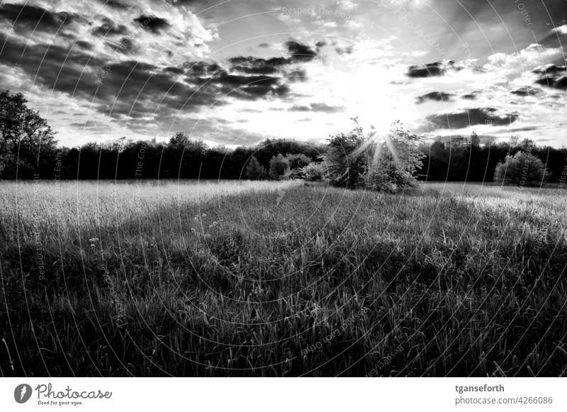Die Sonne geht über einem Busch auf einer Wiese unter Licht Schattenseite Außenaufnahme gegenlicht Sonnenlicht Sonnenstrahlen Gegenlicht Menschenleer Kontrast