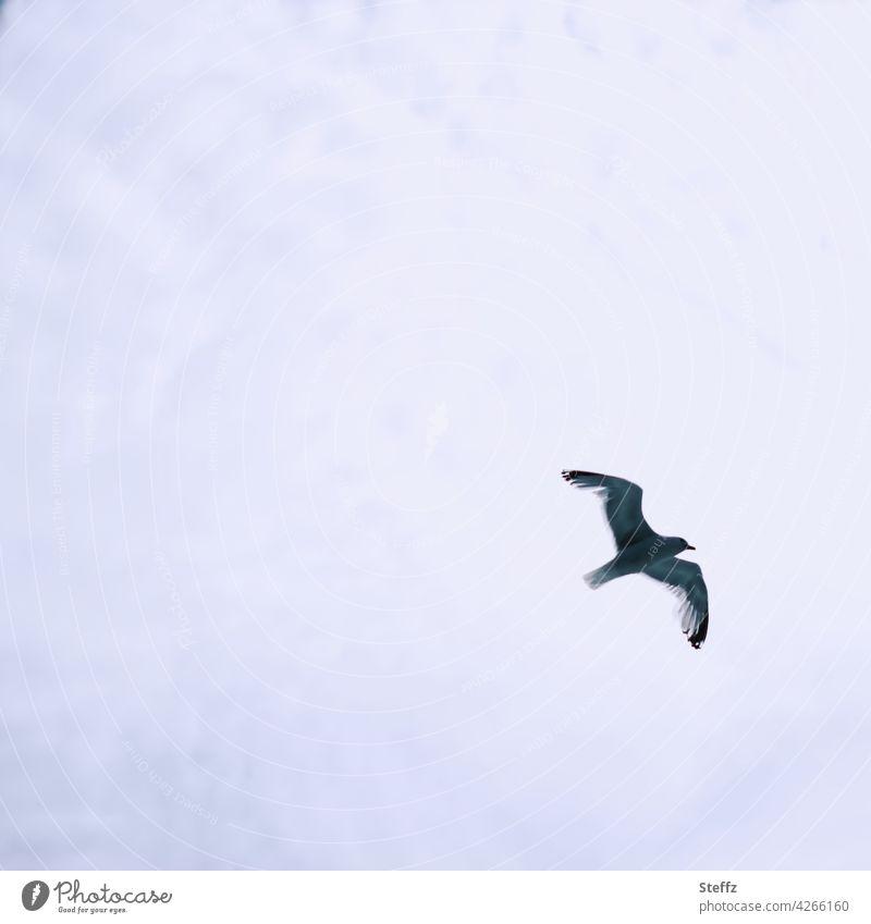 eine Möwe fliegt unter der Wolkendecke Vogel Meeresvogel fliegender Vogel fliegende Möwe Vogelbeobachtung Vogelflug hoch oben bewölkter Himmel Wolkenhimmel