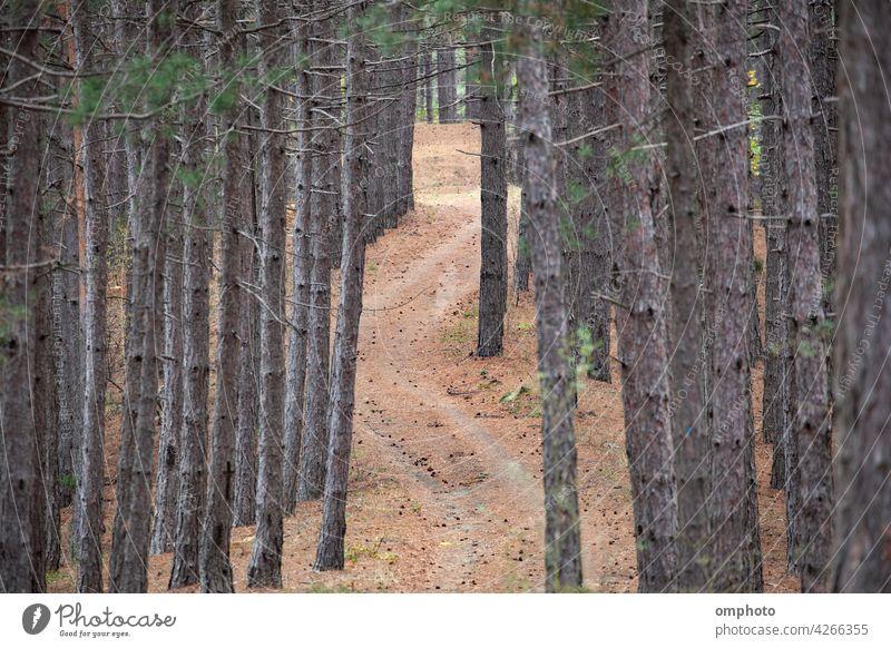 Kurvenreiche Straße im Wald Landschaft geschlängelt nadelhaltig im Freien Baum Natur grün natürlich Ansicht Berge u. Gebirge schön Verkehr kurvenreich