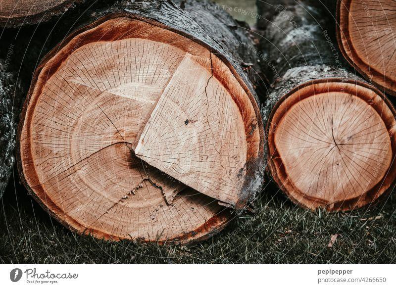 abgesägter Holzstamm ein Teil sieht aus wie ein Kuchenstück Holzschnitt Holztisch Holzbrett Holzplatte Holzwand Tag Nahaufnahme sägen Kreis Menschenleer Mauer