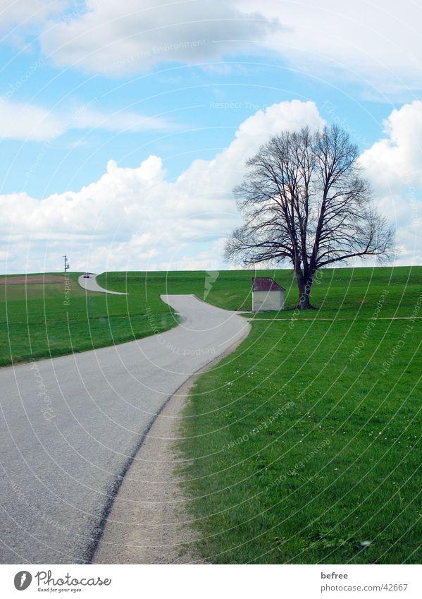 road to nowhere Baum strasse ohne ende Blauer Himmel Natur die strasse ind nirgendwo