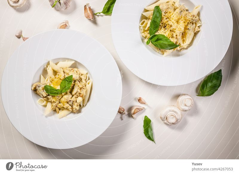 Appetitliche Penne-Nudeln mit Champignons, Käse-Parmesan-Sahnesauce und frischem Basilikum. Traditionelle mediterrane Küche. Zwei Portionen auf hellem Hintergrund. Ansicht von oben. Platz zum Kopieren