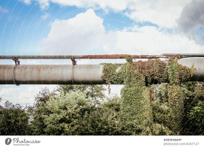die Natur holt sich alles zurück - alte Gasleitung Konzept Industrie Industrieanlage Industriegelände industriell Farbfoto Außenaufnahme Fabrik