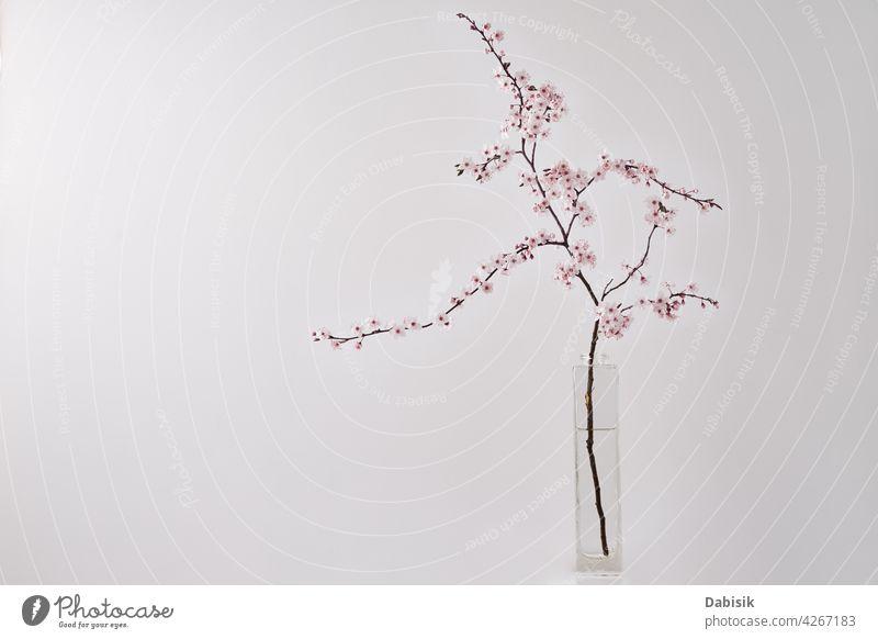 Blossom Kirsche Brunch in Vase auf weißem Tisch Ast Blume Hintergrund Blüte heimwärts Leben Frühling Design Innenbereich Pflanze noch Baum Regal Wand