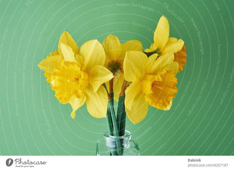 Narzissen Blumen in Vase auf grünem Hintergrund Blumenstrauß gelb Textfreiraum Frühling Sommer Blüte Natur schön Ostern kreativ sehr wenige Minimalismus Stil
