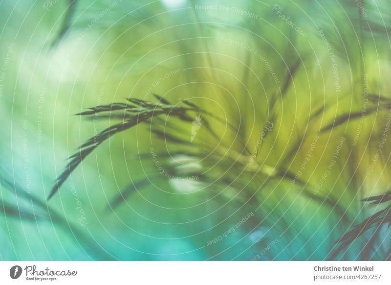 Gräser im Wind Bewegung Natur Gras Wiese Pflanze grün abstrakt Hintergrundbild Frühling Sommer Unschärfe gelb blau schön Bewegungsunschärfe