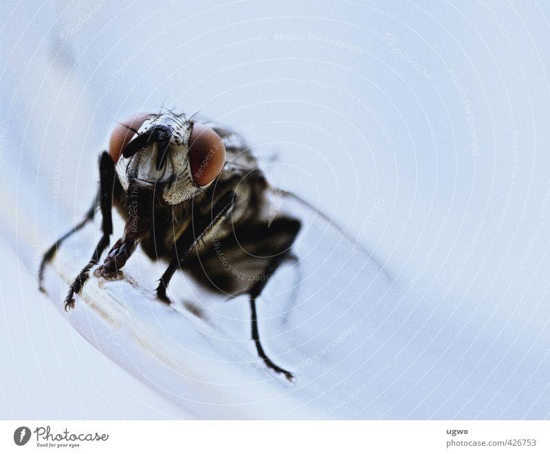auge um auge.... Teller Tier Fliege Tiergesicht Auge grau weiß Farbfoto Innenaufnahme Nahaufnahme Menschenleer Zentralperspektive