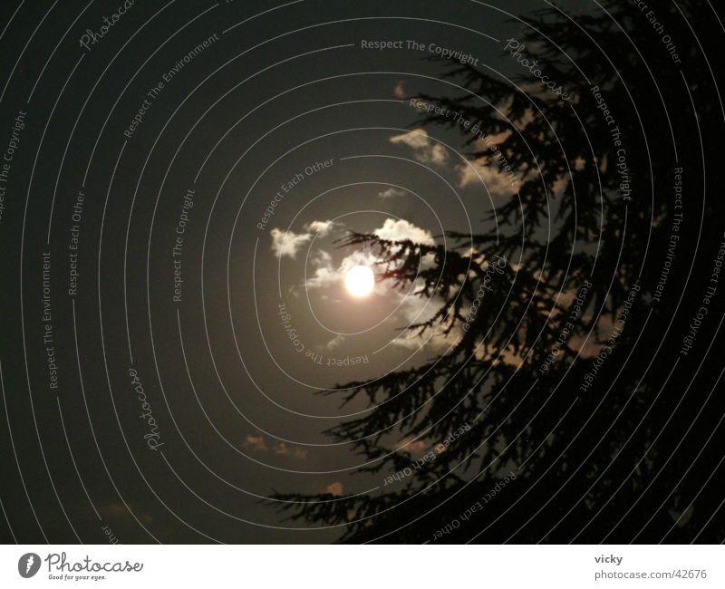 Vollmond Nacht Beleuchtung Mond Vollmnond Himmel