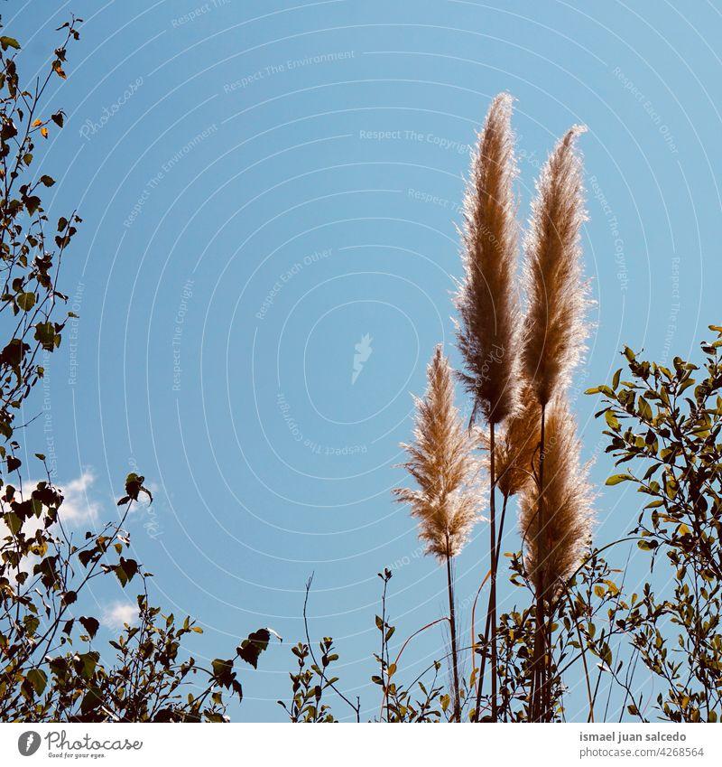 weiße Blumen Pflanze und blauer Himmel Pflanzen Silhouette sehr wenige Garten geblümt Flora Natur natürlich romantisch Schönheit Zerbrechlichkeit Frische