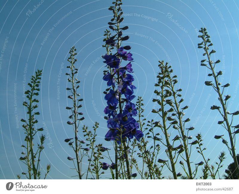 Unter blauem Himmel Natur Blume Pflanze violett