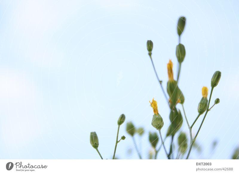 Himmel mit Blume Pflanze Wolken Coolness