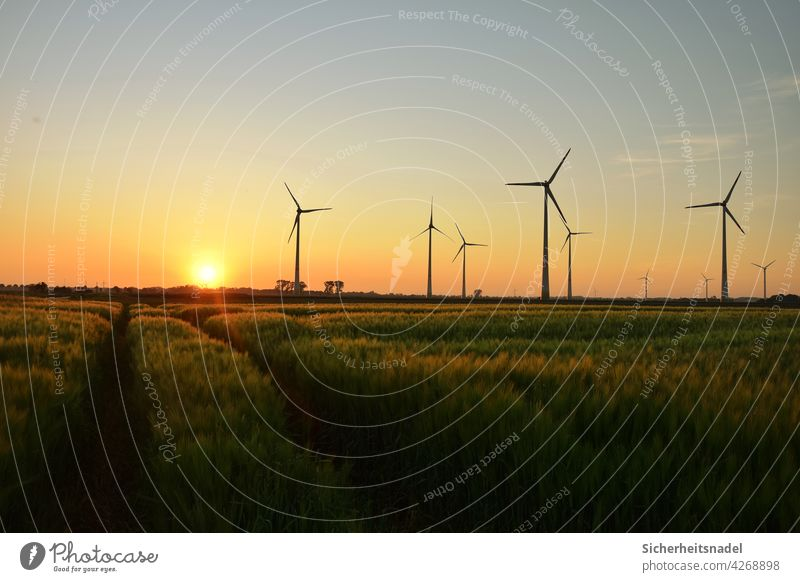 Sonnenuntergang und Windräder Roggen Roggenfeld Nutzpflanze Getreide Getreidefeld Außenaufnahme Sommer Menschenleer Landschaft Natur Feld windräder Sonnenlicht