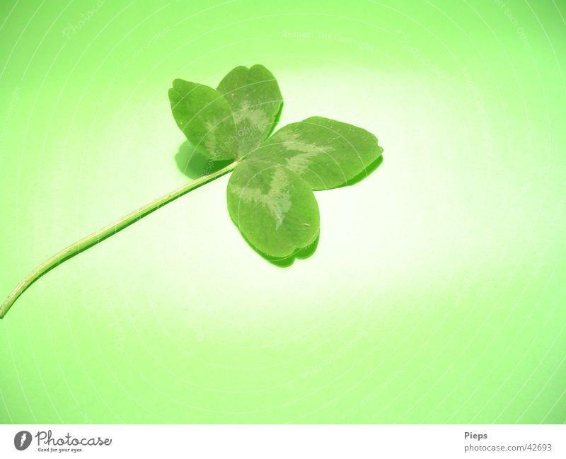 Glück gehabt Farbfoto Innenaufnahme Nahaufnahme Textfreiraum unten Hintergrund neutral Kunstlicht Pflanze Wiese Zeichen grün Wunsch Kleeblatt