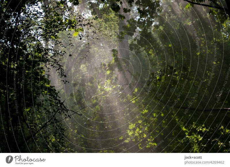 künstliche Versorgung der Vegetation mit Wasser Natur Niederschlag Bewässerung Sonnenlicht grün Park Tiergarten üppig (Wuchs) Naherholungsgebiet Sommer Stimmung
