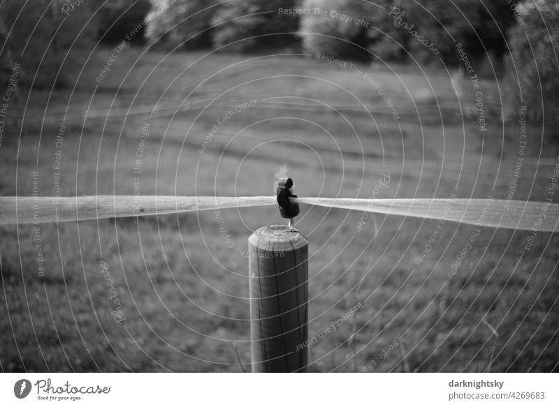 Zaun einer Weide mit elektrischer Sicherung und hölzernem Weidezaunpfahl Landwirtschaft Band Leitung Elektrozaun Außenaufnahme Natur Landschaft Farbfoto Feld