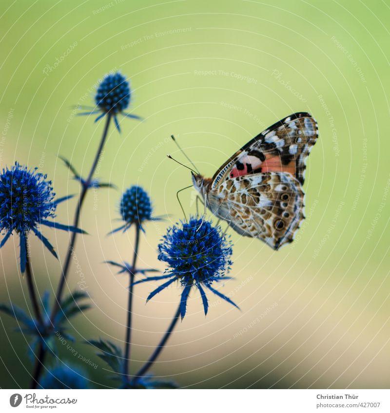Sommertanz- gut gelandet Natur schön Pflanze Sommer Erholung ruhig Tier Wiese Garten Feld Zufriedenheit stehen Sträucher Schönes Wetter ästhetisch genießen