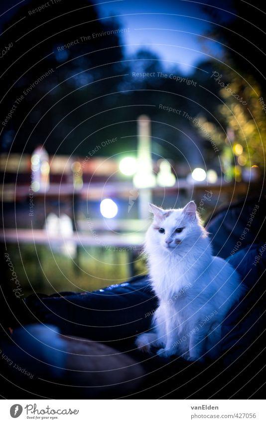 Katze weiß ruhig Tier Denken Garten Behaarung sitzen Coolness Sofa Haustier selbstbewußt Selbstständigkeit
