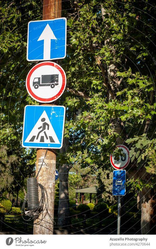Drei Straßenschilder zwischen den Bäumen in der hellen Morgensonne. gerade weitergeben Regie Bus Linie stoppen Zebra Überfahrt Fußgänger Ikon Symbol Zeichen