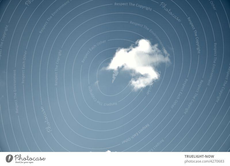 White Ninja - oder: Kung Fu Wolke im Flug Blauer Himmel weiße Wolke kleine Wolke Wölkchen weiss blau dynamisch Fantasie Form bewegt Natur leicht flüchtig
