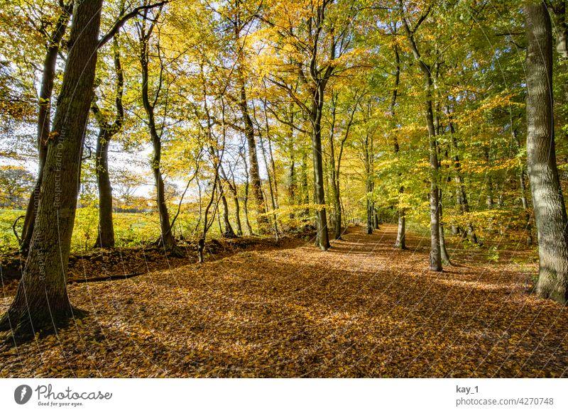 Laubwald im Herbst herbstlich Herbstlaub Herbstfärbung Herbstbeginn Herbstwald Herbststimmung Bäume Wald Waldlichtung Waldrand Feld Feldrand Natur