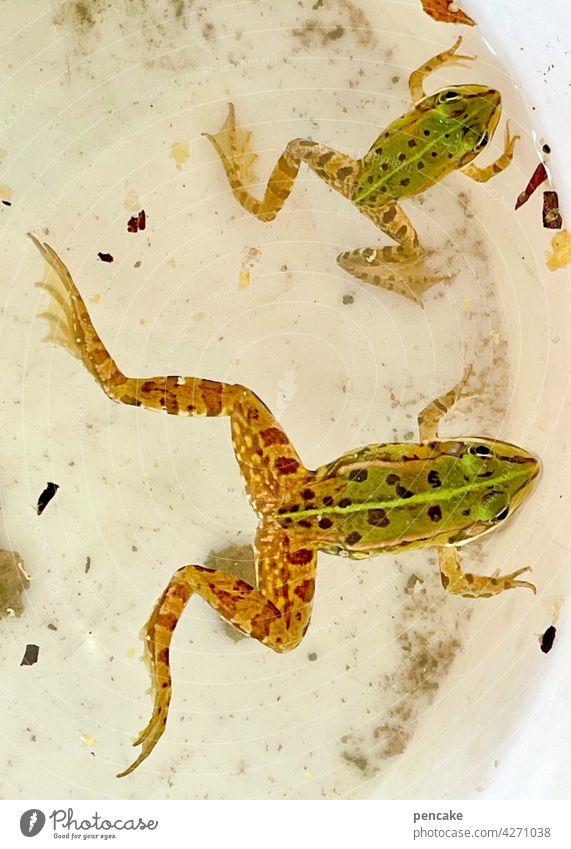 1700 | abstrampeln Frosch Eimer fangen Garten Grün Teich gefangen zwei amphibien Nahaufnahme wachsen Anstrengung Mühe Arbeit Wasser leben