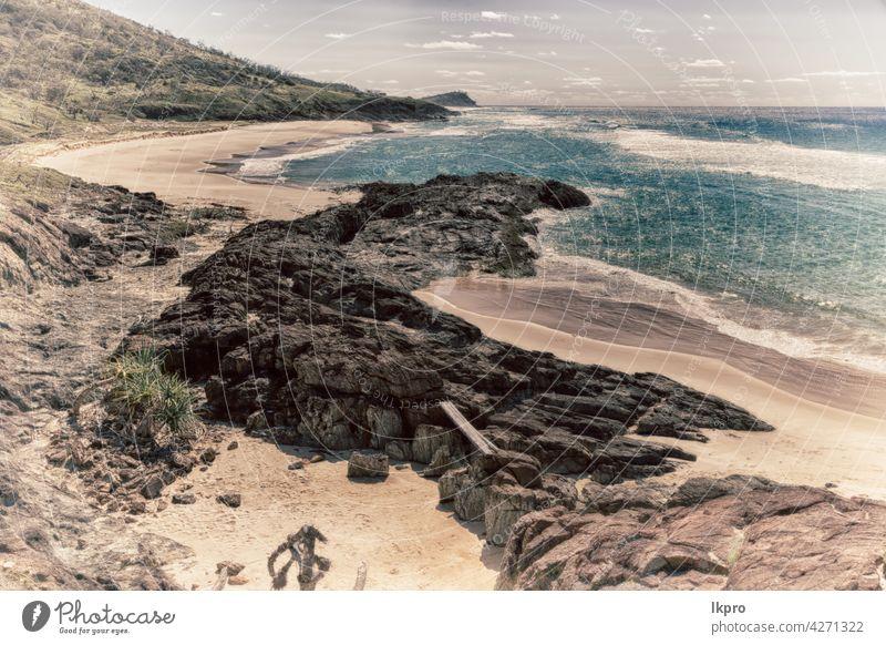 in australien die strandinsel der baum und die felsen Strand Australien Insel blau Pfingstsonntag Meer Wasser Sand Queensland Steine MEER Landschaft Natur
