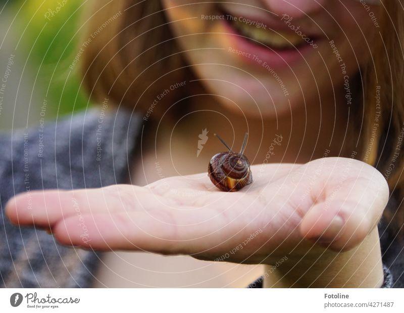 Ha, nicht nur Mama kann Schnecken retten, freut sich Fotolines Tochter. Schneckenhaus langsam Fühler Tier schleimig Schleim Haus Nahaufnahme Geschwindigkeit