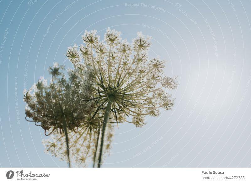 Wilde Blumen gegen den Himmel wild Wildpflanze Hintergrund Textfreiraum natürliches Licht Tageslicht Blüte Unschärfe Wildblumen Blühend Natur Pflanze