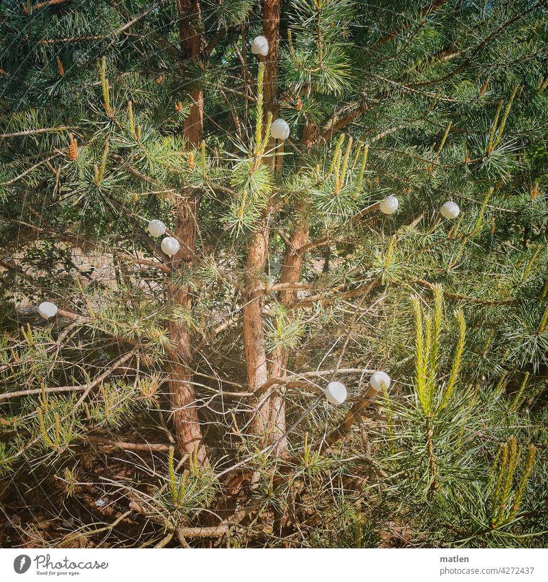 Eierbaum Kiefer Wald Eierschalen aufgehängt grün Nadelwald Baum Natur Ast Frühling Wunder