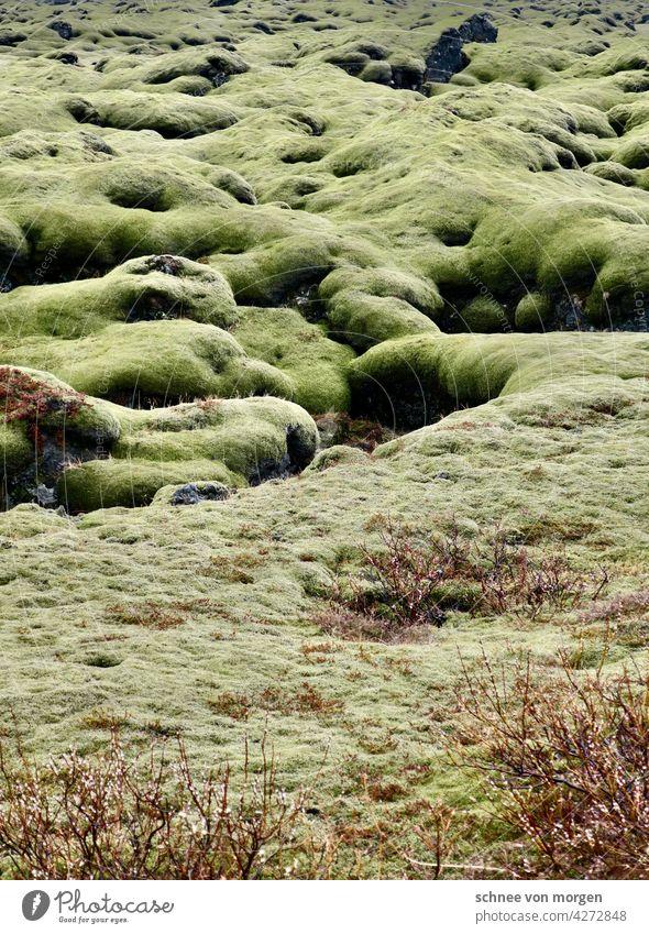 grünes gesundes fröhliches moos moss island natur boden Außenaufnahme Natur Ferien & Urlaub & Reisen Tourismus Landschaft Abenteuer Ferne landscape Farbfoto