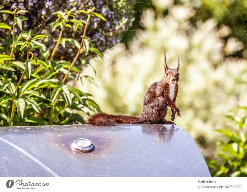 grillgut Tierporträt Tiergesicht Tierliebe Farbfoto niedlich Menschenleer Außenaufnahme Neugier beobachten Eichhörnchen Garten Grill frech klein lustig Wildtier