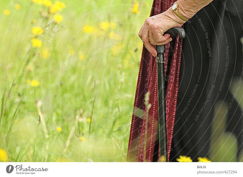 Alte pflegebedürftige Frau, stützt sich auf Stock. Mensch Natur alt Hand Landschaft Senior Wiese feminin Garten Park 60 und älter 50 plus Fitness Spaziergang