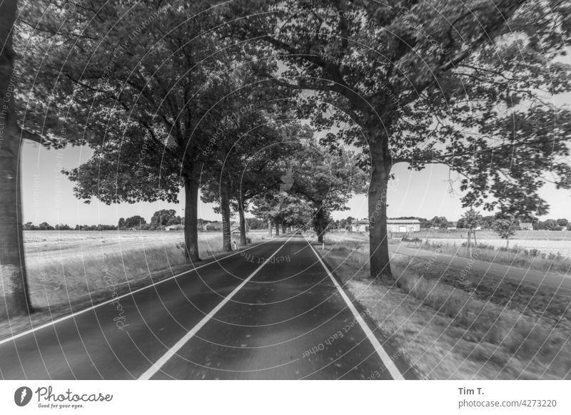 eine Allee in Brandenburg Baum Wege & Pfade Straße Natur Landschaft Außenaufnahme Menschenleer Umwelt Zentralperspektive Textfreiraum unten Verkehrswege Tag