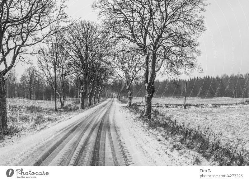 eine Allee im Winter Baum Schnee kalt Straße Frost Eis Landschaft Außenaufnahme Menschenleer weiß Natur Tag Winterurlaub Wege & Pfade Zentralperspektive Klima