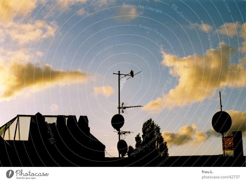 Blick am Abend Himmel Sommer Wolken rosa Dach Technik & Technologie Kitsch Schornstein Taube Schalen & Schüsseln Oberlicht Elektrisches Gerät Pappeln