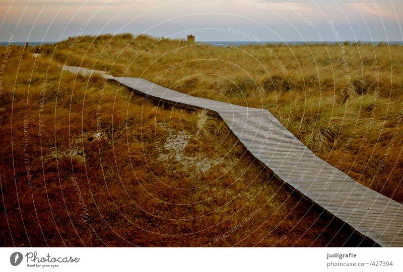 Darßer Ort Umwelt Natur Landschaft Pflanze Klima Gras Küste Ostsee natürlich wild Stimmung Erwartung Tourismus Ferien & Urlaub & Reisen Düne Farbfoto