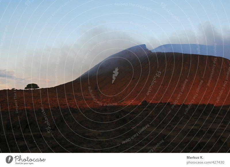 The little big grouser Baum rot Landschaft Tier Beginn Urelemente Rauchen gigantisch Vulkan