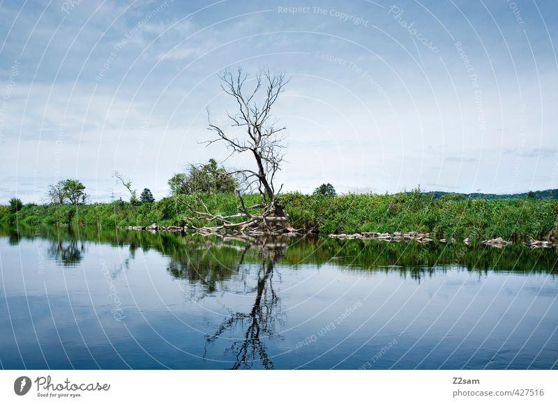 vergänglichkeit Natur blau grün Sommer Baum Einsamkeit ruhig Landschaft Umwelt kalt Wiese natürlich Stimmung Idylle Schönes Wetter Sträucher