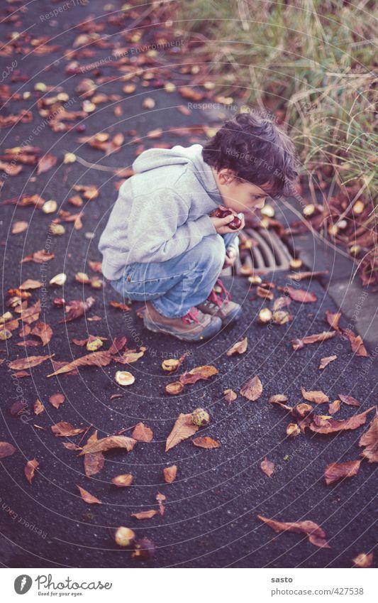 alles genau betrachten maskulin Kind Junge Kindheit Leben 1 Mensch 3-8 Jahre Umwelt Natur Herbst Sammlerstück hocken Blick Neugier Kastanie Sammlung entdecken