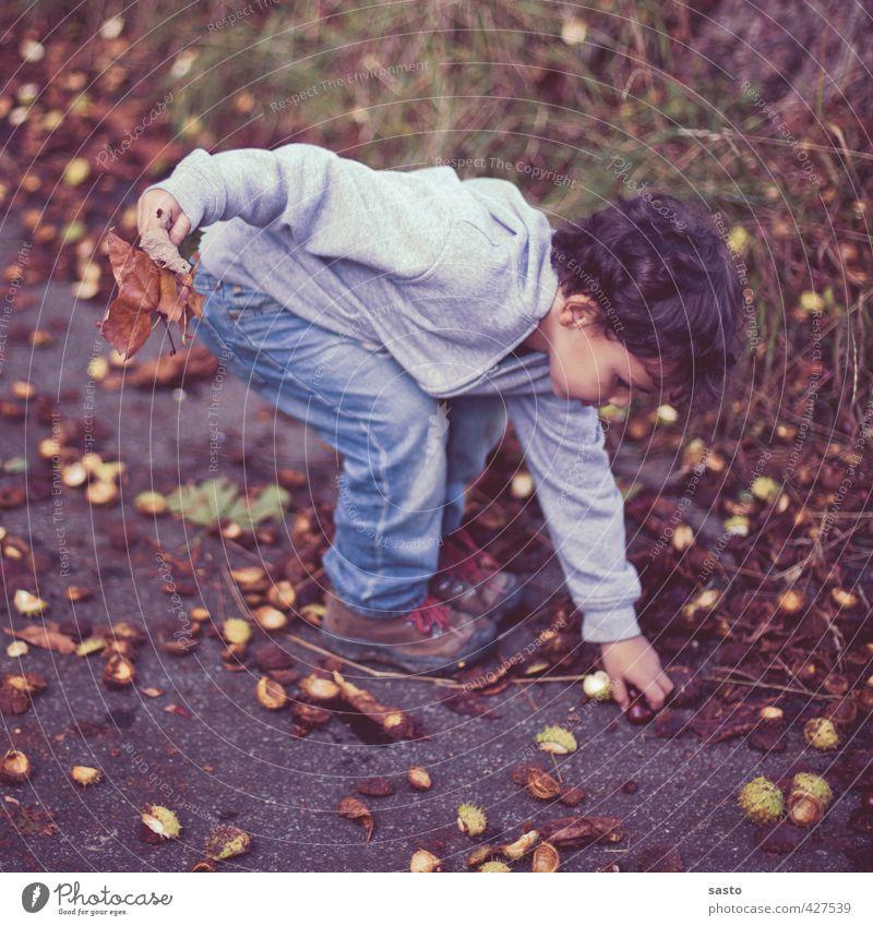 sammeln Kind Junge Kindheit Leben 1 Mensch 3-8 Jahre Umwelt Natur Herbst Freude Kastanie Sammlung heben Farbfoto Außenaufnahme Ganzkörperaufnahme