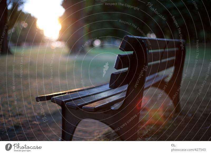 pause Umwelt Natur Landschaft Sonne Sonnenaufgang Sonnenuntergang Sonnenlicht Sommer Schönes Wetter Baum Gras Park Wiese sitzen warten ruhig Fernweh Einsamkeit