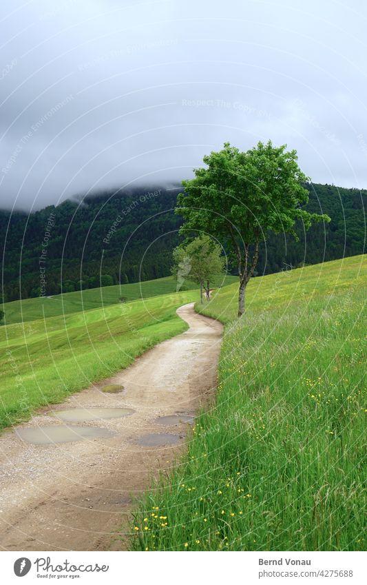 Gerstenhalm Wege & Pfade wandern Schwarzwald grün Wetter Nebel Hochschwarzwald Weide Baum Kurve Zukunft Perspektive Richtung Pflanze na Natur schön Ruhe