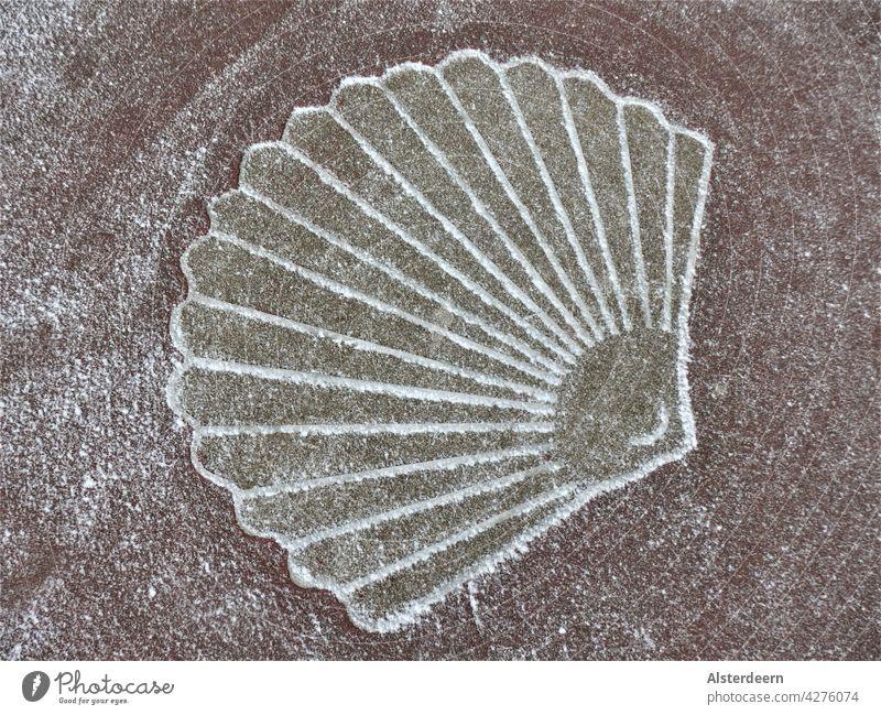 Symbol einer Jakobsmuschel im Asphalt auf dem Weg an der Küste im Winter leicht mit Schnee bepudert Muschel Fächermuschel Jacobsmuschel Kammmuschel Schablone
