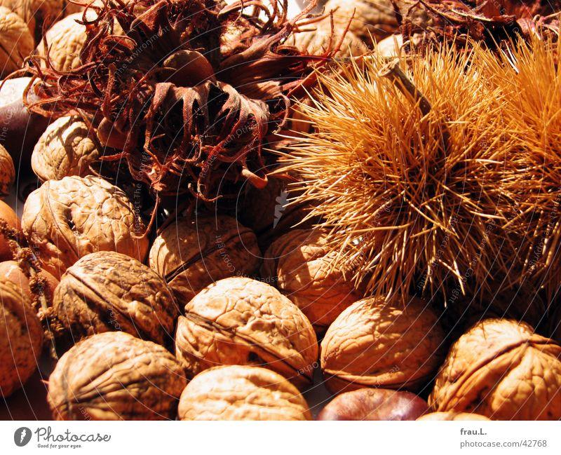 Herbst Sonne Ernährung braun Gesundheit Frucht Stachel Nuss getrocknet Kastanienbaum Vegetarische Ernährung Walnuss Haselnuss