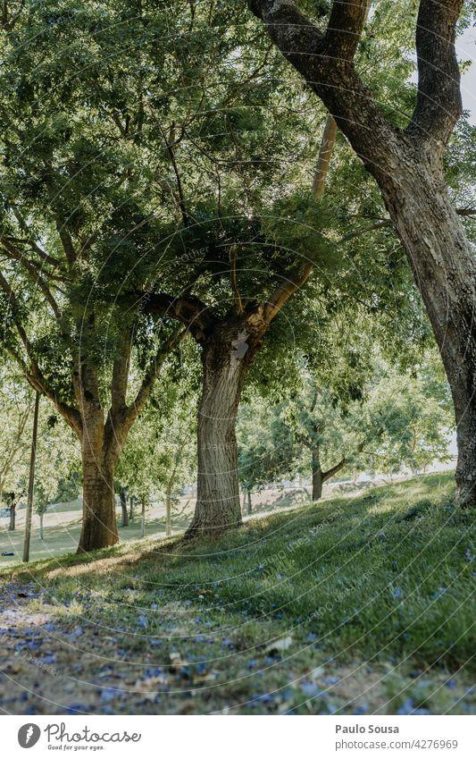 Park Bäume Baum Natur Umweltschutz Wald Außenaufnahme Tanne Forstwirtschaft Landschaft Menschenleer Holz grün Farbfoto Wachstum Tag