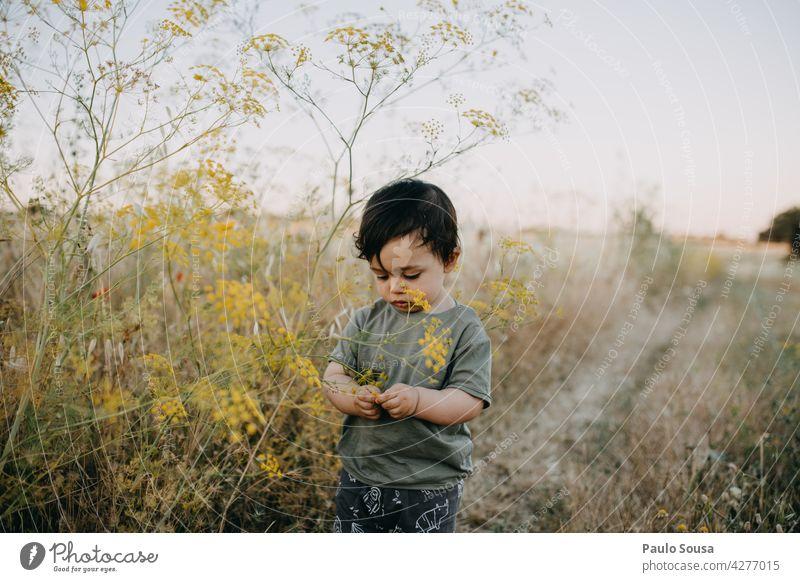 Kind spielt mit wilden Blumen Neugier erkunden 1-3 Jahre Kaukasier Sommer authentisch Freizeit & Hobby Kindheit Lifestyle Außenaufnahme Natur Glück Freude