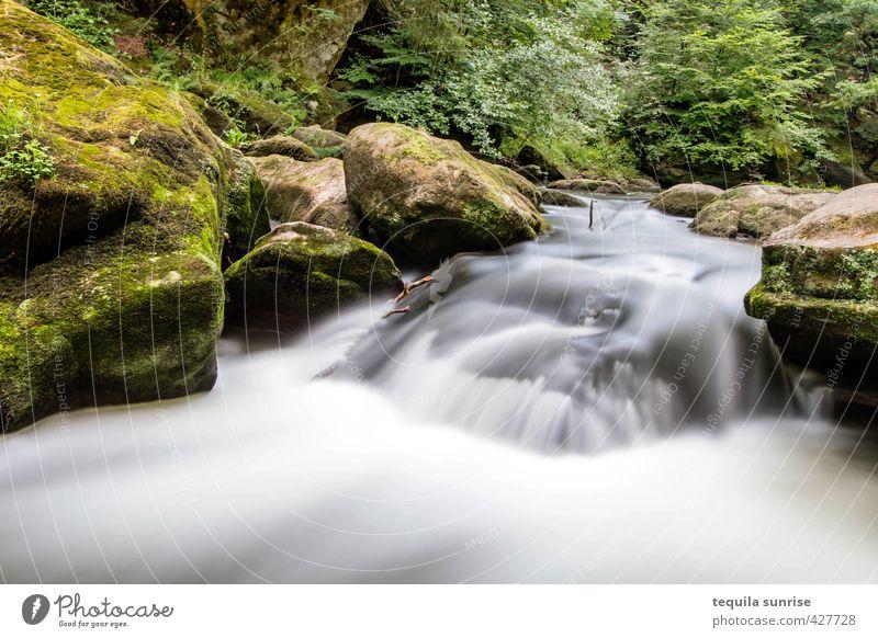 Flow Umwelt Natur Wasser Frühling Sommer Baum Gras Moos Wald Felsen Flussufer Bach Wasserfall Stromschnellen Erholung ruhig fließen Farbfoto Außenaufnahme