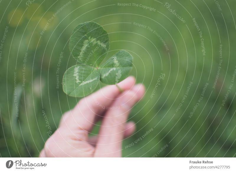 Hand einer Frau hält ein dreiblättriges Kleeblatt Weißklee Blätter Dreieck Symmetrie grün hellgrün Stiel Wiese Pflanze Nutzpflanze Glück Felder pflücken