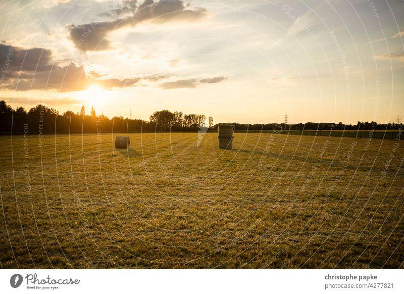 Feld mit Heuballen im Abendlicht Abendsonne Landwirtschaft Pflanzen Getreide Nutzpflanze Wachstum Sommer Menschenleer Ackerbau Natur Ernte Umwelt Landschaft
