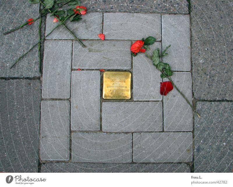 zertreten Antisemitismus Bürgersteig Zerstörung Faschismus Nationalsozialismus Rose Trauer Kriminalität Verzweiflung Wahrzeichen Denkmal Verkehrswege